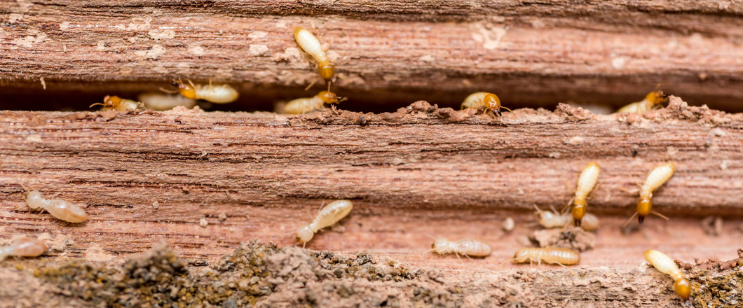 Protect your home or office from costly termite damage with Solutions Pest Management! Call Today For Details